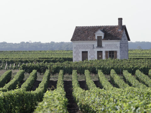Vignoble de Valencay